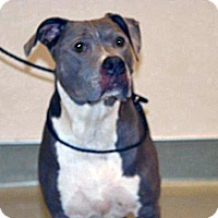 Adopt A Pet :: Sammy - Wildomar, CA
