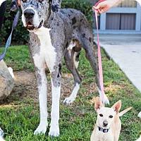 Adopt A Pet :: Fezzik & Buttercup - San Diego, CA