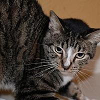 Adopt A Pet :: Kosmo AAA Choo - Glendale, AZ