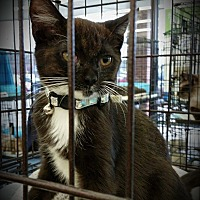 Adopt A Pet :: Salem - Fairborn, OH