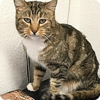 Adopt A Pet :: Mittens - Redding, CA