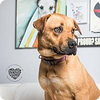 Adopt A Pet :: Serena - Inglewood, CA