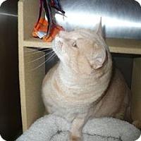 Adopt A Pet :: Moqui - Colmar, PA