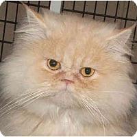 Adopt A Pet :: Georgio - Davis, CA