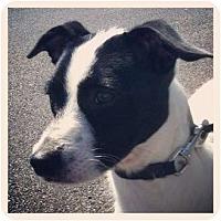 Adopt A Pet :: Bandit - Louisville, KY