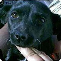 Adopt A Pet :: Mini Mouse - dewey, AZ