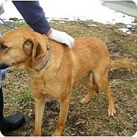 Adopt A Pet :: Clyde - Harrisburgh, PA