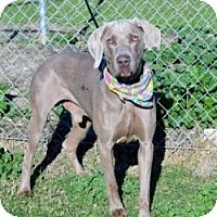 Adopt A Pet :: Dugan - Sun Valley, CA