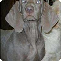 Adopt A Pet :: Brady ADOPTION PENDING!! - Antioch, IL