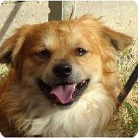 Adopt A Pet :: Sundance - Arlington, TX