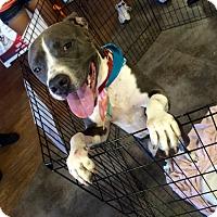 Adopt A Pet :: Kaya - Hollywood, FL