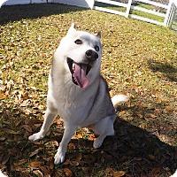 Adopt A Pet :: Jordan - Orlando, FL
