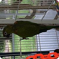 Adopt A Pet :: Patches & Remi - Punta Gorda, FL