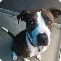 Adopt A Pet :: Harold - Santa Barbara, CA
