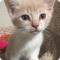 Adopt A Pet :: Reid - North Highlands, CA