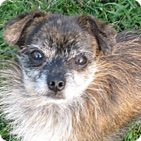 Adopt A Pet :: Wallace - Buffalo, WY