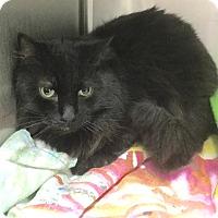 Adopt A Pet :: Benz - Webster, MA