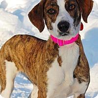 Adopt A Pet :: Annaliese - Cherry Hill, NJ