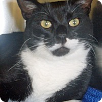 Adopt A Pet :: ADOPTED!!!   O'Malley - Channahon, IL