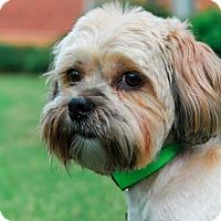 Adopt A Pet :: Tallapoosa - Atlanta, GA