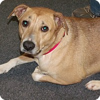 Black Mouth Cur Mix Dog for adoption in Somerset, Kentucky - Hera