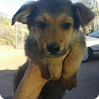 Adopt A Pet :: William - Tucson, AZ