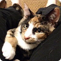 Adopt A Pet :: Merryweather - Orange, CA