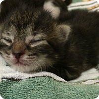 Adopt A Pet :: Mason - Delray Beach, FL