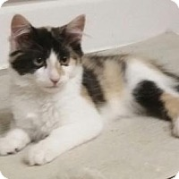 Adopt A Pet :: Maisy - Evergreen, CO