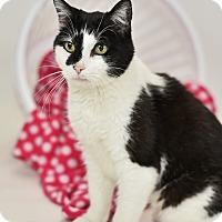 Adopt A Pet :: Flora - St. Louis, MO
