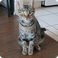 Adopt A Pet :: Vianne - Mississauga, Ontario, ON