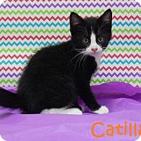 Adopt A Pet :: Catilac - Bucyrus, OH