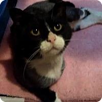 Adopt A Pet :: Captain - Rochester, MN