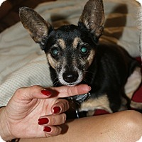 Adopt A Pet :: Heidi - Pompano Beach, FL