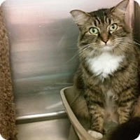Adopt A Pet :: Heather - Richmond, VA