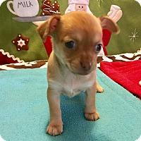 Adopt A Pet :: Matilda (BH) - Santa Ana, CA