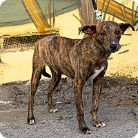 Adopt A Pet :: Spike - from Costa Rica - Los Angeles, CA