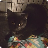 Adopt A Pet :: Onyx - Virginia Beach, VA