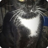 Adopt A Pet :: MAX - Corona, CA