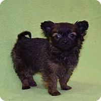 Adopt A Pet :: Kiramu - Sacramento, CA