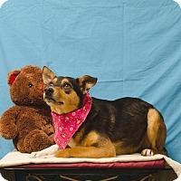 Adopt A Pet :: ADDISON - Poteau, OK