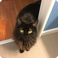 Adopt A Pet :: Bailey - Manhattan, KS