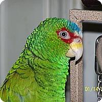 Adopt A Pet :: Kokomo & Dude - Lexington, GA