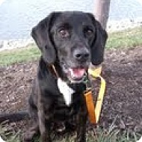 Adopt A Pet :: Herbie - Lewisville, IN