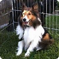 Adopt A Pet :: Duncan - La Habra, CA