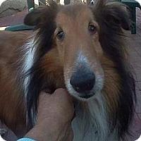 Adopt A Pet :: Marlee - La Habra, CA