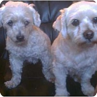 Adopt A Pet :: Penelope (left) - Lake Forest, CA