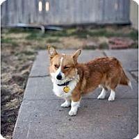 Adopt A Pet :: Mandy - Inola, OK
