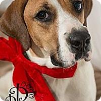 Adopt A Pet :: Betsy - Tallahassee, FL