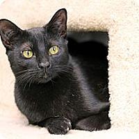 Adopt A Pet :: Yukie - Chicago, IL